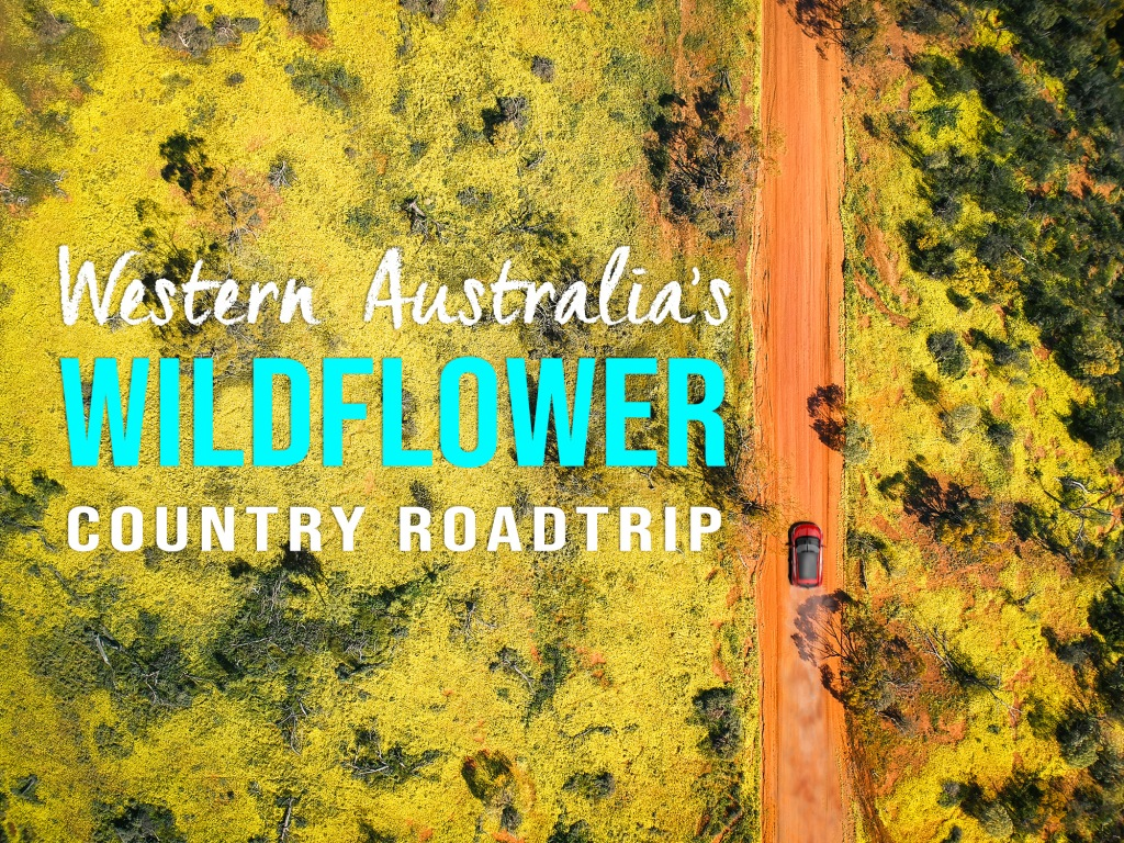 drone image from the air, a car drives along an orange road surrounded by yellow flowers